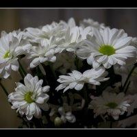 хризантемы :: gribushko грибушко Николай