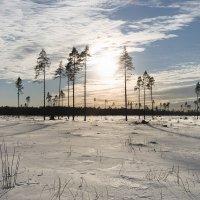 Мечта о лесе :: Олег Пученков