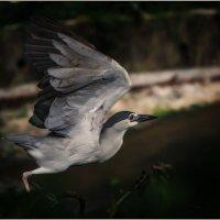 Спугнули...Куала-Лумпурский парк птиц...Малайзия. :: Александр Вивчарик