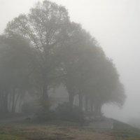 Туман :: Teresa Valaine