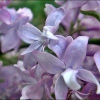 Дыхание весны... :: Нина Корешкова