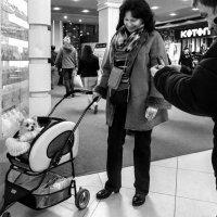 Дама с собачкой. :: Надежда Ивашкина