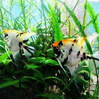 Рыбки в неволе . :: Мила Бовкун