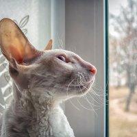Неземная красота!...) :: Александр Рамус