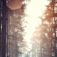 Магия утра :: Елизавета Димова