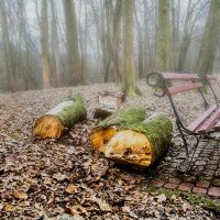 Туман :: Евгений Мокин