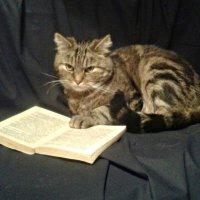 Кот ученый :: Олег Шмидт