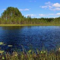 Шуми, шуми, зеленый лес! :: mike95