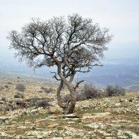 Дерево в горах :: Aidar Атамамедов