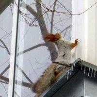 Эй вы там , наверху ! :: Мила Бовкун
