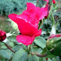 Дождь в июле...2 :: Тамара (st.tamara)