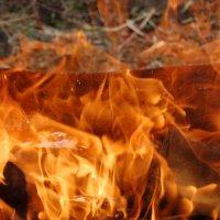 Пламя :: Дмитрий Глушко