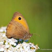 Бабочка :: Александр Рождественский