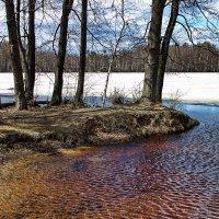 Воды холодное тепло... :: Лесо-Вед (Баранов)