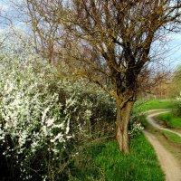 Проселок..Ранняя весна.. :: евгения