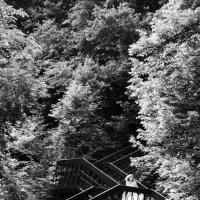 Лестница :: Сергей Козинцев