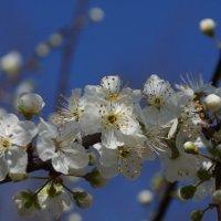 Так, весна ... :: Serega Денисенко