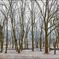 Тишина и покой :: Denis Aksenov