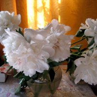 Белые, нежные пионы :: Елена Семигина