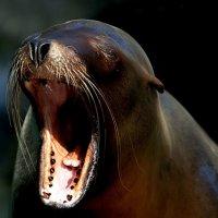 Где же этот стоматолог ?!!!! :: Alexander Andronik