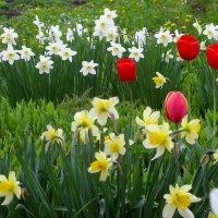 Весна на участке(была) :: Нина северянка