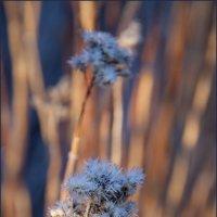 морозное утро в середине марта :: liudmila drake