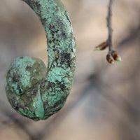 Весна - запятая Жизни.......... :: Tatiana Markova