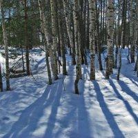 Березы зимой :: Наталья