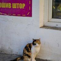 Хозяйка улиц :: Саша Лист