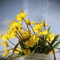 Весенние цветочки :: Татьяна Кретова