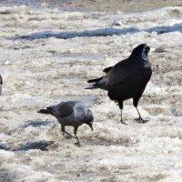 Когда же снег расстает? :: Ната Волга