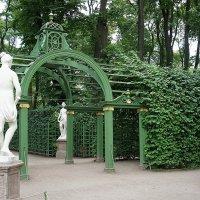 Летний сад, берсо :: Елена Смолова