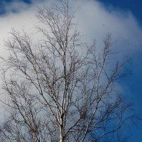 Далёкие птицы :: Фотогруппа Весна.