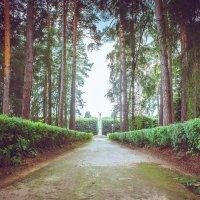 В парке :: Михаил Кучеров