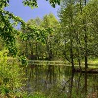 Весенний пейзаж. :: Алексей Жуков
