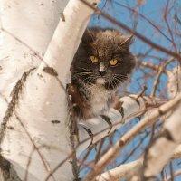 А мне летать о кота...)) :: Владимир Хиль