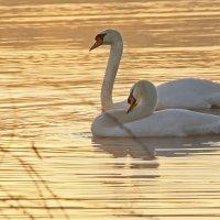 Утром на озере :: Alexander