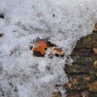 Зимние опята :: Татьяна Кретова