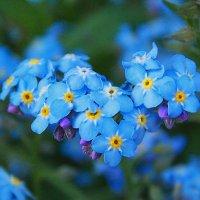 Голубое сердце :: *ALISA* ( minck55 )