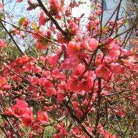 Весна :: Сергей Л