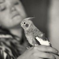 Попугай Любимый :: Ирина Шарапова