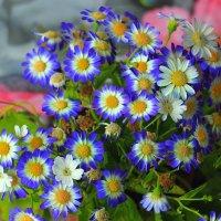 цветы :: Viktor Eremenko