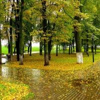 Осенний дождь. :: Анатолий Борисов