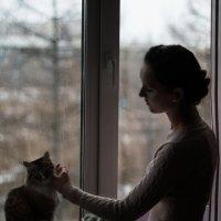 Кошки**** :: Евгений Банных