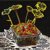 Календула и клубника в акварели :: galina tihonova