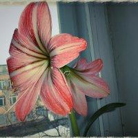 На школьном окне :: Irina