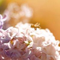 Пчёлк :: Сергей