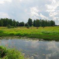 Летом на природе. :: Святец Вячеслав