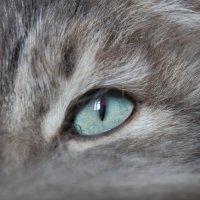Всевидящее око :: Алексей Масалов