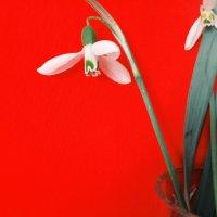 white on red / белое на красном :: Настенька Сорокина